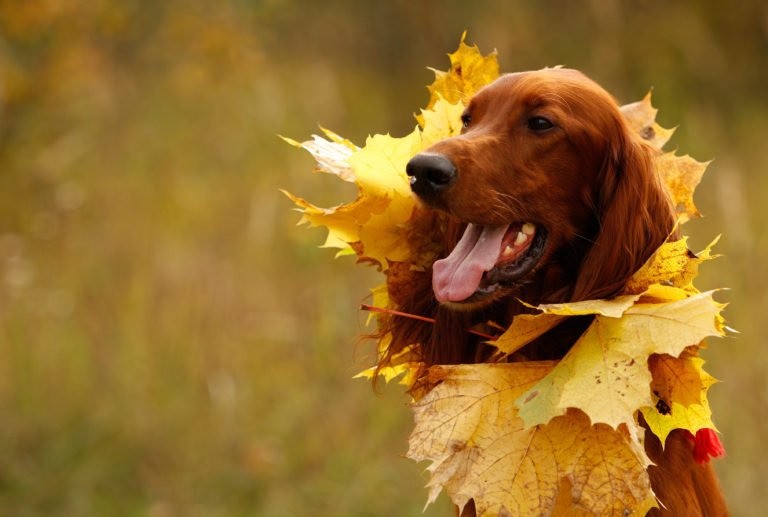 dog covered in leafs