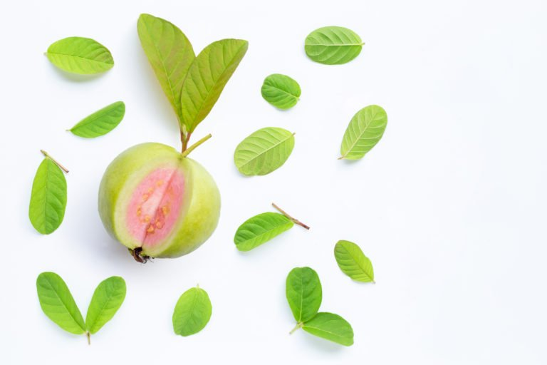 Guava fruit and benefits for dogs