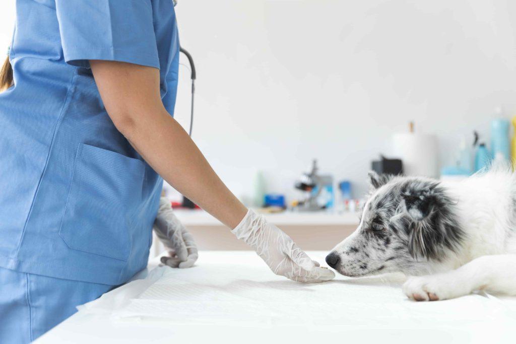 dog visiting the vet